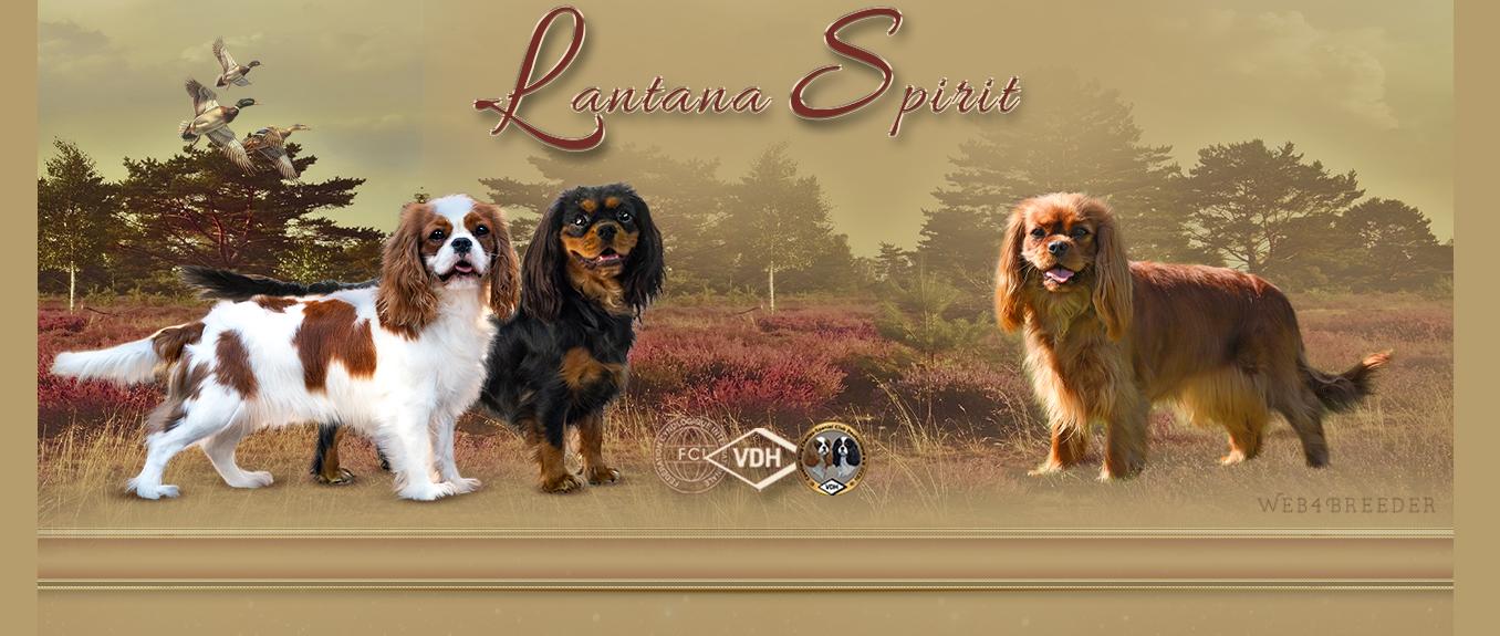 Lantana Spirit – Cavalier King Charles Spaniel